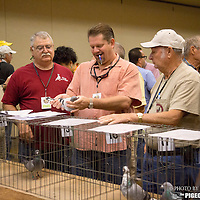 at the AU Convention pigeon auction held by the Gulf Coast Homing Club in Tampa, Fl., on Saturday, November 23, 2013. Photo by David Stephenson