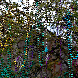 February 21, 2012; New Orleans, LA, USA; Beads hang from trees along the  uptown New Orleans St. Charles Avenue parade as the Krewe of Zulu parade rolled on Mardi Gras day. Mardi Gras is an annual celebration that ends at midnight with the start of the Catholic Lenten season which begins with Ash Wednesday and ends with Easter. Photo by: Derick E. Hingle