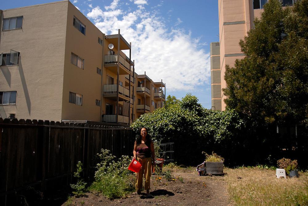 gardening in the backyard, Berkeley, July 2008.