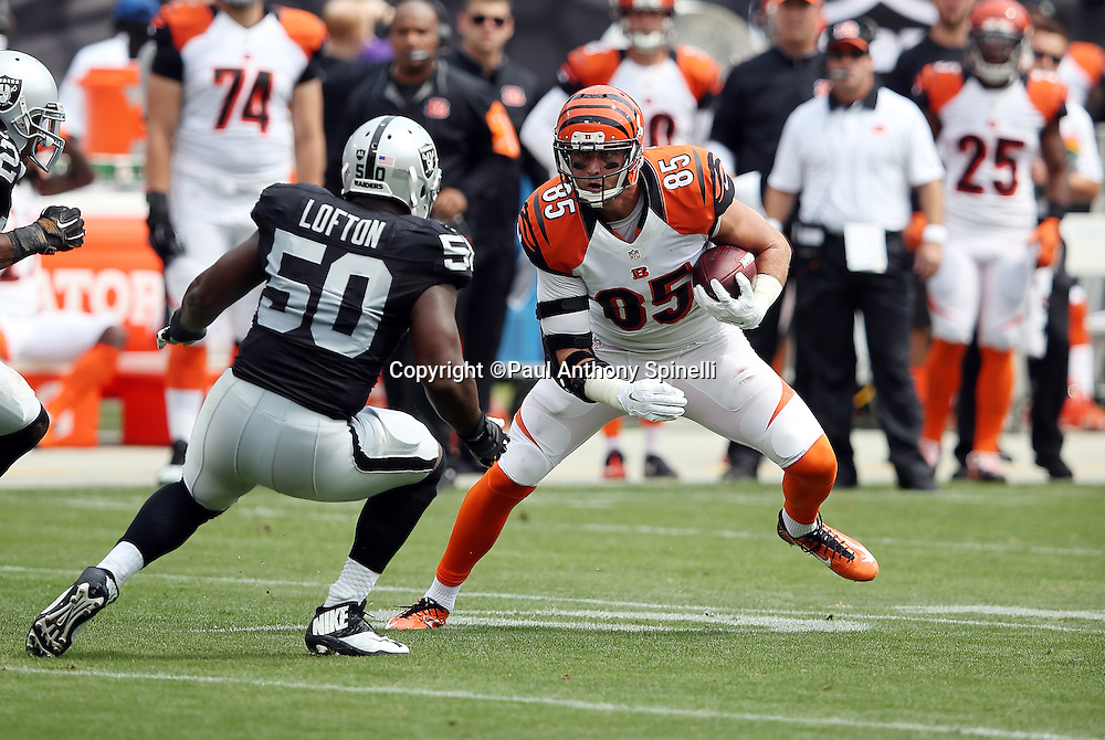 Cincinnati Bengals tight end Tyler Eifert (85) catches a pass and gets chased by Oakland Raiders linebacker Curtis Lofton (50) during the 2015 NFL week 1 regular season football game against the Oakland Raiders on Sunday, Sept. 13, 2015 in Oakland, Calif. The Bengals won the game 33-13. (©Paul Anthony Spinelli)