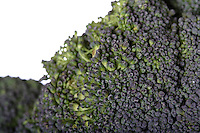 Close-up of broccoli on white background