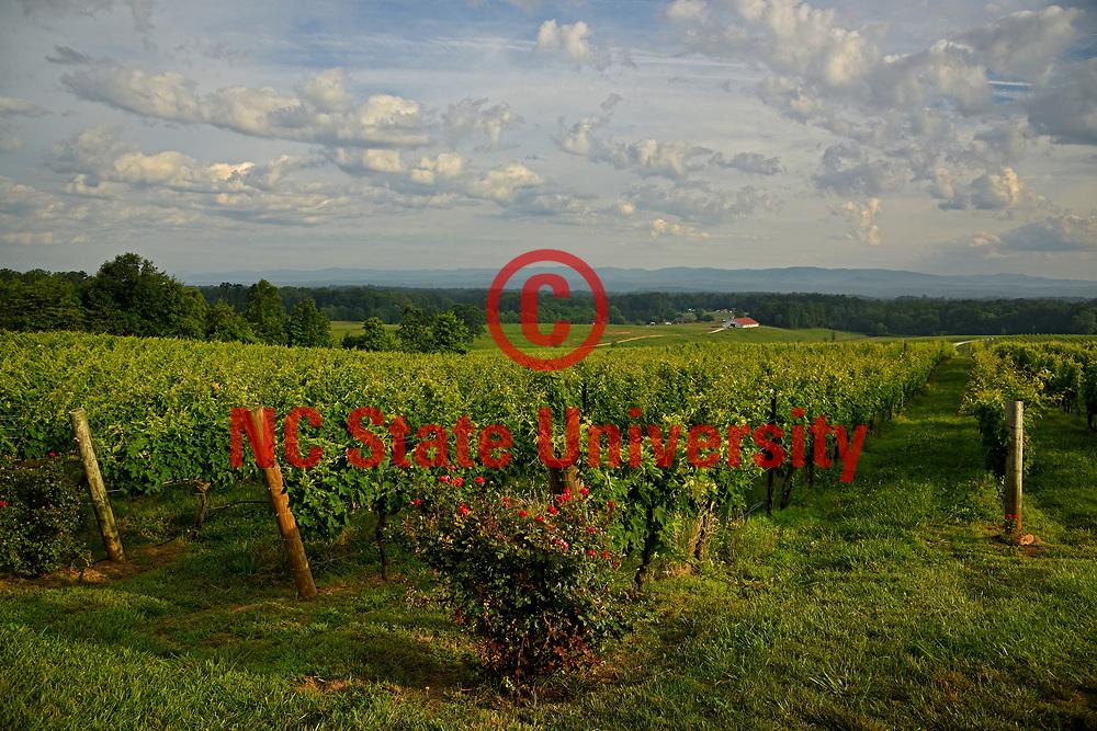 The sun rises on Raffaldini Vineyards in Wilkes County.