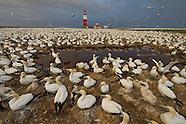 Bird Island - Algoa Bay
