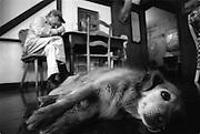 Jesse, the town dog, lays in the Hütte Restaurant in Helvetia, West Virginia.