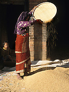 cleaning rice grains in nepal