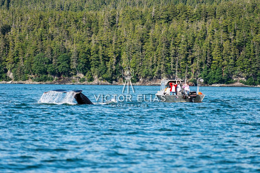 Whale watching. Juneau, Alaska.