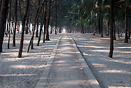 A long pathway runs the length of a wooded section of Cox's Bazar beach. The trees here were planted artificially after the cyclone of 1991 uprooted all the original trees and killed roughly 140,000 people.