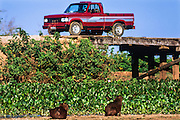 Wooden bridges & Capybara (Hydrochaeris hydrochaeris)<br /> Northern Pantanal<br /> Transpantaneira highway<br /> Mato Grosso<br /> BRAZIL, South America
