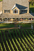Aerial view of Bergstrom vineyards, Dundee Hills AVA, Willamette Valley, Oregon