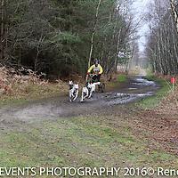3 Dog Sunday Short Course