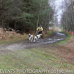 3 Dog Sunday Short Course