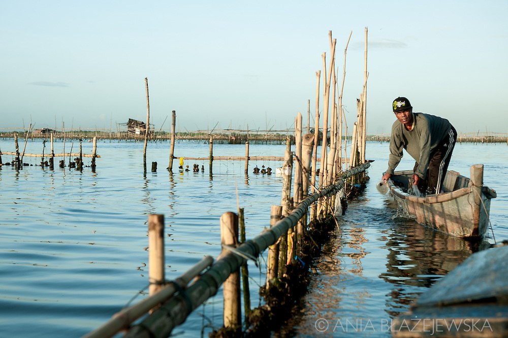 Harvesting oysters in Cavite, Metro Manila, Philippines