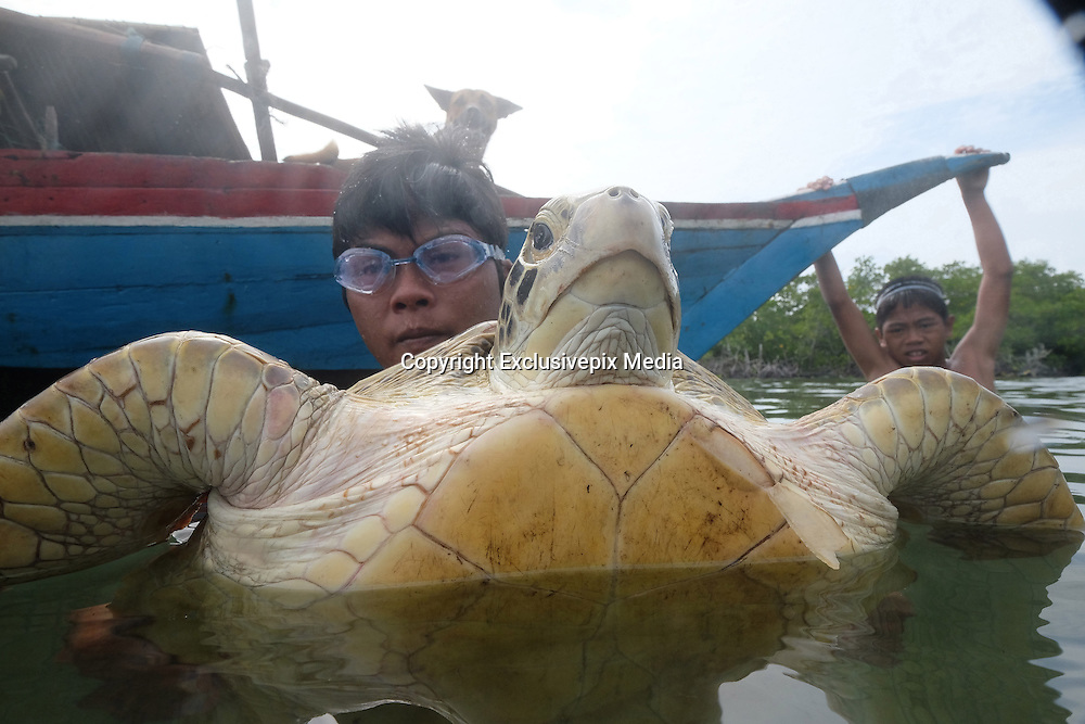 LINGGA, INDONESIA - <br /> <br /> Sea Tribe Children in Indonesia, Last Nomad Tribe Sea in Indonesia<br /> <br /> Children of sea tribal or called sea people were playing with a sea turtle at Tajur Biru island in Lingga, Riau Islands province, Indonesia.<br /> Sea Tribe or called sea people who inhabit Tajur Biru Island, Lingga Regency, Riau Islands Province - Indonesia, sea people is the last existing tribe. <br /> only 15 families 52 people in total. Sea people are wandering tribes who live in the sea. The indigenous people called the sea because it has characteristics specific life, such as family life in the boat and wander along the waters.<br /> Historically, Sea People used to be a pirate, but it plays an important role in the kingdom of Srivijaya, the Sultanate of Malacca and Johor Sultanate. They keep the straits, repel pirates, guiding traders to harbor , and maintain their hegemony in the region.<br /> ©Exclusivepix Media