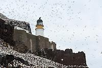 Leuchtturm auf Bass Rock; Bass Rock, Schottland