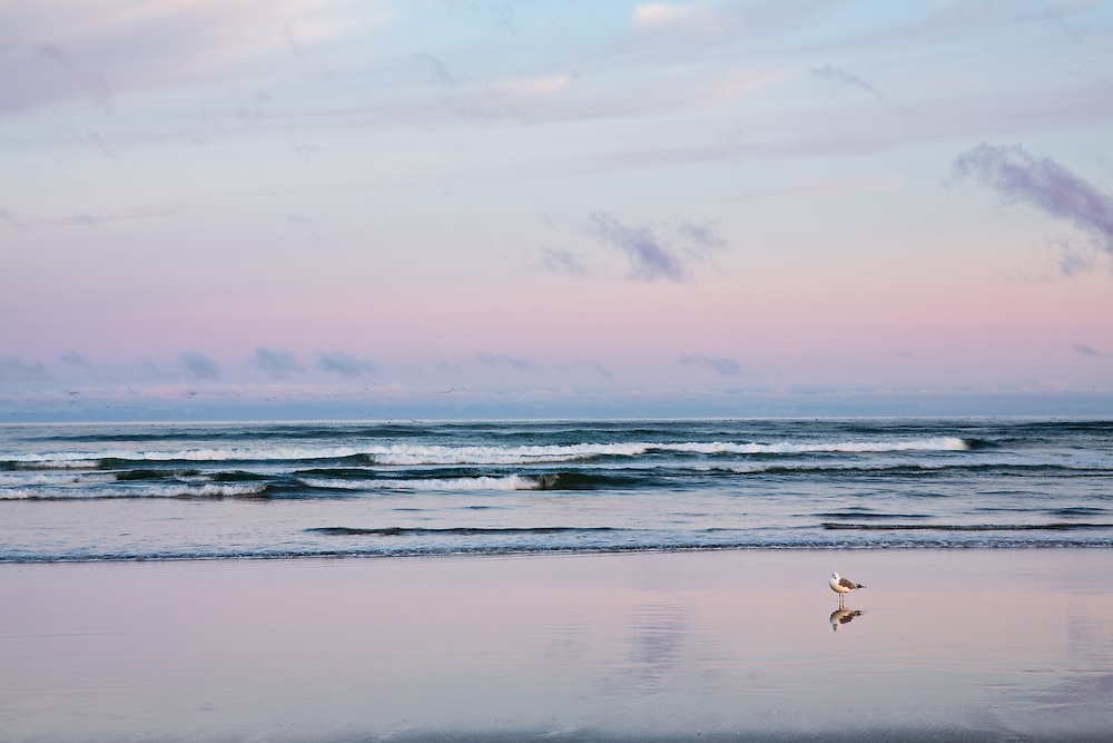 Lone gull on the beach at Seaside, Oregon.