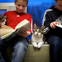"(L-R) Seth Wiggins and Ethan Wiggins read to ""Stewart"" and ""Tyler,"" cats up for adoption, as part of ""The Book Buddies Program"" at the Animal Rescue League of Berks County in Birdsboro, PA on February 11, 2014.  Children in grades 1-8 read to the cats as a way to improve their reading skills and gain confidence.  The shelter animals can be a non-evaluative presence that can provide support and comfort to participants without judging them.  Students showed sustained focus and maintained a higher state of awareness, as well as improved attitudes toward school, according to researchers at Tufts University.  Photo taken February 11, 2014.  REUTERS/Mark Makela  (UNITED STATES)"