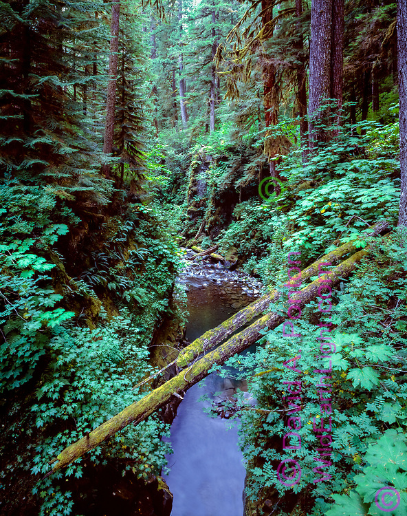 Gorge with fallen logs, Sol Duc Gorge, Olympic National Park, © 1996 David A. Ponton, [From 4x5 original]