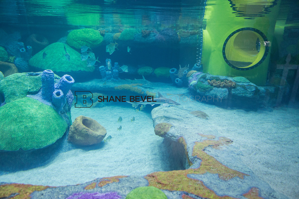 3/2/17 10:59:51 AM -- The ribbon cutting and grand opening of the new sea turtle exhibit at the Oklahoma Aquarium in Jenk, Okla. <br /> <br /> Photo by Shane Bevel