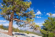 The Needles from Dome Rock, Sequoia National Forest, Sierra Nevada Mountains, California