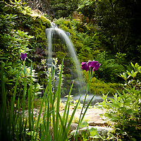 NEELY'S GARDEN & WATERFALLS JUNE  2013