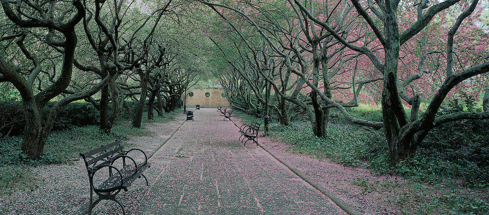 New York City, Cental Park, Conservatory Garden, New York, path crab apples