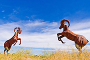 Metal bighorn sheep sculptures by Ricardo Breceda at Galleta Meadows Estate, Borrego Springs, California USA