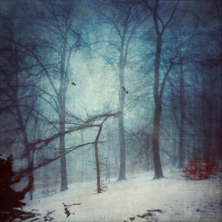 Misty winter day in a park - texturized and manipulated photograph<br />