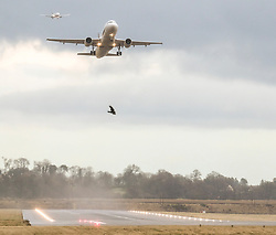 High Winds at Edinburgh Airport, Tuesday 7th January 2020<br /> <br /> Planes struggled on landing and take-off as high winds hit Edinburgh Airport today<br /> <br /> Pictured: A Lufthansa flight takes off as a Ryanair comes in to land<br /> <br /> Alex Todd | Edinburgh Elite media