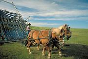 Harvesting the hay, Arthur County, Nebraska