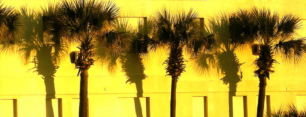 Palm Trees and Shadows Against Yellow Wall