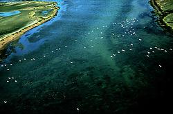 Coastal Migration