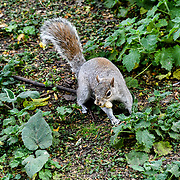 A squirrel eating nuts at St James park and a lovely weather on 23 April 2019, London, UK.