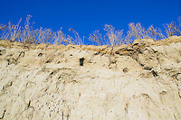 View of desert plants on riverbank cliff against blue sky Southeast Washington USA.