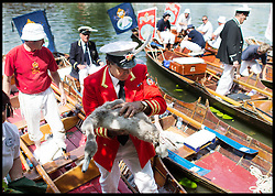 Queen's Swan Marker David Barber  joins Swan Uppers take part in the Annual Swan Upping Ceremony on <br /> The  River Thames in West London, United Kingdom. Swan Upping is the annual census of the Swan population on stretches of the Thames.<br /> Monday, 15th July 2013<br /> Picture by Andrew Parsons / i-Images