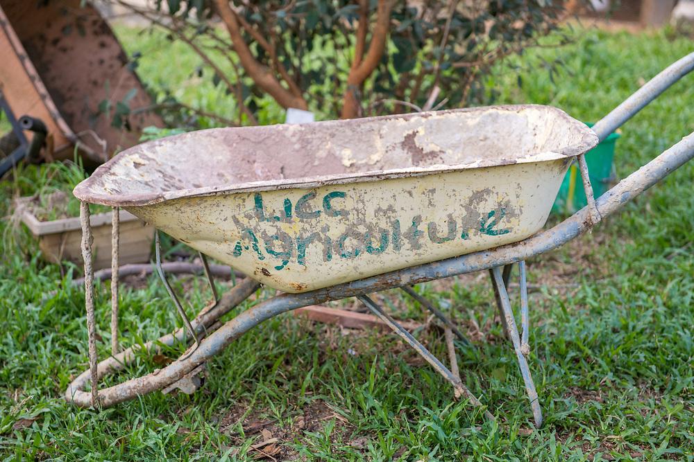 A beaten up wheelbarrow sits in the grass on a farm in Ganta,Liberia