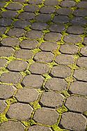 small bricks and moss walkway