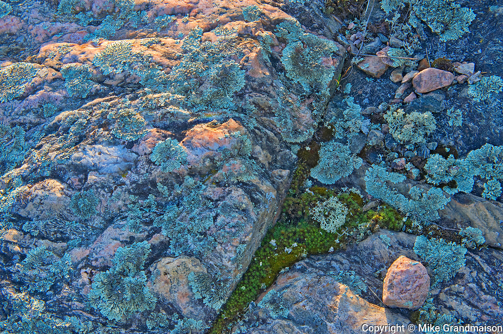 Lichens on Precambrian Shiled rock<br />