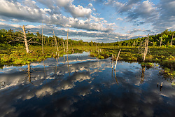 Clouds reflect in a boggy pond in Maine's north woods. Near Greenville, Maine.