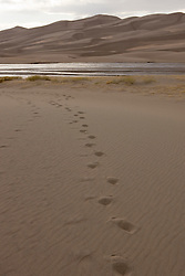 Footprints lead towards Medano Creek and the dune field.  Great Sand Dunes National Park and Preserve contains the tallest sand dunes in North America. The Dunefield, topping off with Star Dune at 750 feet, is created by sand trapped by the nearby Sangre de Christo Mountains (larger rougher grains and pebbles) and the San Juan Mountains (65 miles to the west).  Waterways such as Medano Creek help carry the sediment down to the San Luis valley where the dunes are found. Great Sand Dunes National Park and Preserve, Mosca, Colorado.