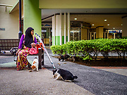 11 DECEMBER 2018 - SINGAPORE:  A Muslim woman feeds the stray cats in the government housing estate she lives in the Geylang neighborhood. The Geylang area of Singapore, between the Central Business District and Changi Airport, was originally coconut plantations and Malay villages. During Singapore's boom the coconut plantations and other farms were pushed out and now the area is a working class community of Malay, Indian and Chinese people. In the 2000s, developers started gentrifying Geylang and new housing estate developments were built.     PHOTO BY JACK KURTZ