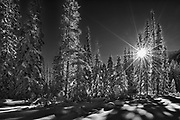 Sunburst through coniferous forest, Kootenay National Park, British Columbia, Canada