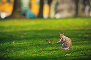 Wright Park squirrel - Tacoma, WA