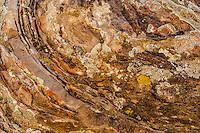 Lichen encrusted rock patterns; Buckhorn Draw, San Rafael Swell, Utah