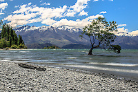 The tree in the lake in Wanaka