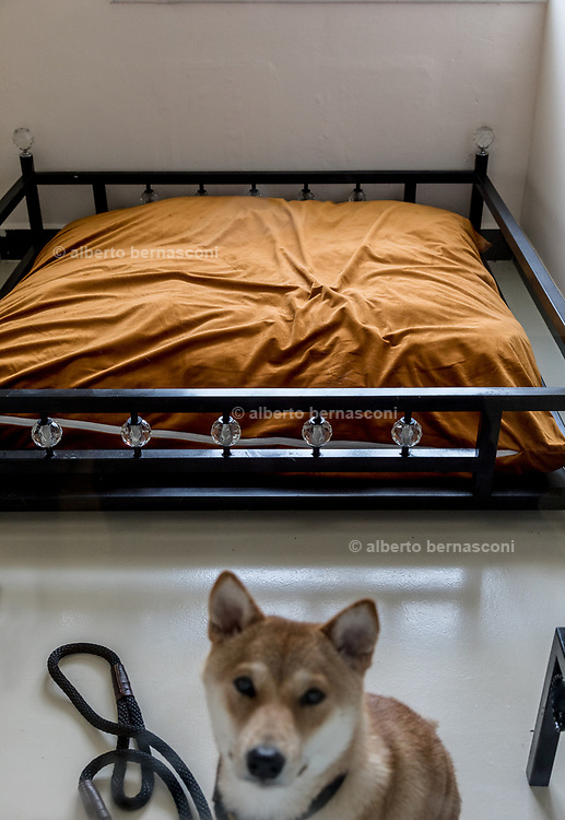 Singapore, the Wagington five stars pet hotel. A luxurious spa with facials and massage, gourmet in-room dining menu and high-end suites with the best beds . all the things to be expected at any five-star hotel.<br /> <br /> At The Wagington, though, the VIP guests enjoying the decadent comfort and first class service are of the four-legged variety.
