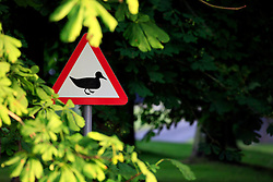 UK ENGLAND WILTSHIRE 26JUN08 - Crossing ducks warning sign on a road near the river Kennet near Stichcoombe in rural Wiltshire, western England...jre/Photo by Jiri Rezac / WWF UK..© Jiri Rezac 2008..Contact: +44 (0) 7050 110 417.Mobile:  +44 (0) 7801 337 683.Office:  +44 (0) 20 8968 9635..Email:   jiri@jirirezac.com.Web:     www.jirirezac.com..© All images Jiri Rezac 2008 - All rights reserved.