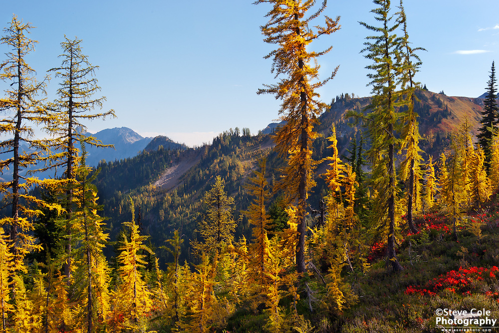 Golden Larch - Wenatchee National Forest
