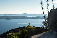 Ile de Ugljan, Croatie. / Island Ugljan, Croatia.