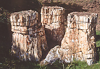 The Trio, three petrified sequoia stumps, Sequoa affins, Florissant Fossil  Beds National Monument, Colorado.