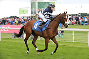 MISTER BELVEDERE (4) ridden by Miss Sophie Dods and trained by her father Michael Dods goes to post before winning The Queen Mothers Cup (for Lady Amateur Riders) over 1m 4f (£20,000)during the Macmillan Charity Raceday at York Racecourse, York, United Kingdom on 16 June 2018. Picture by Mick Atkins.